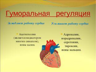 Гуморальная регуляция Замедляет работу сердца Усиливает работу сердца Ацетилх