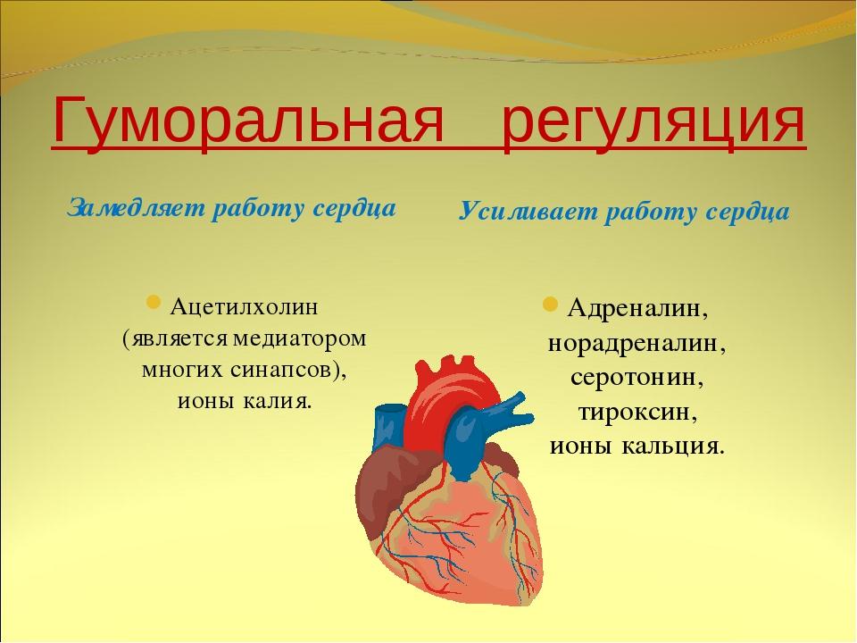 Гуморальная регуляция Замедляет работу сердца Усиливает работу сердца Ацетилх...