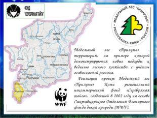 Модельный лес «Прилузье» - территория, на примере которой демонстрируются но