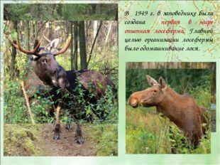 В 1949 г. в заповеднике была создана первая в мире опытная лосеферма. Главной