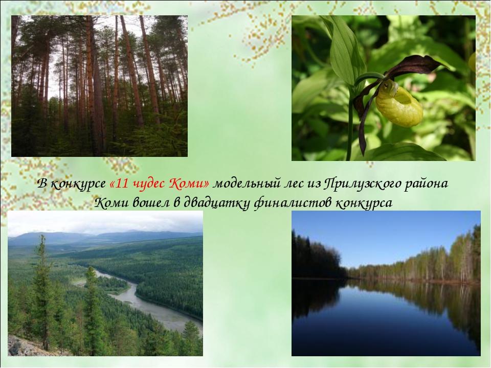 В конкурсе «11 чудес Коми» модельный лес из Прилузского района Коми вошел в д...