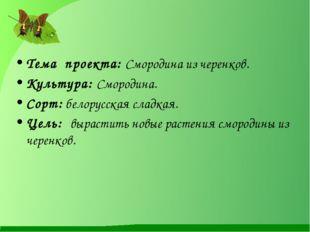 Тема проекта: Смородина из черенков. Культура: Смородина. Сорт: белорусская