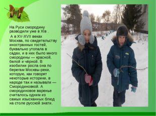 На Руси смородину разводили уже в XIв . А в XV-XVII веках Москва, по свидетел