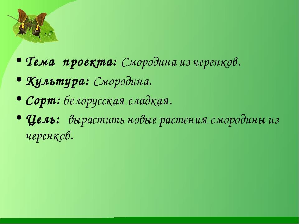 Тема проекта: Смородина из черенков. Культура: Смородина. Сорт: белорусская...