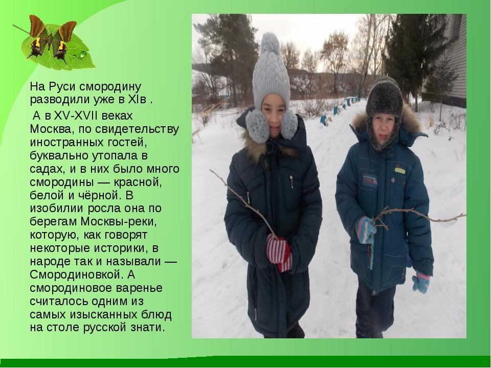 На Руси смородину разводили уже в XIв . А в XV-XVII веках Москва, по свидетел...