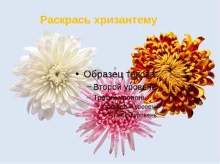 Раскрась хризантему