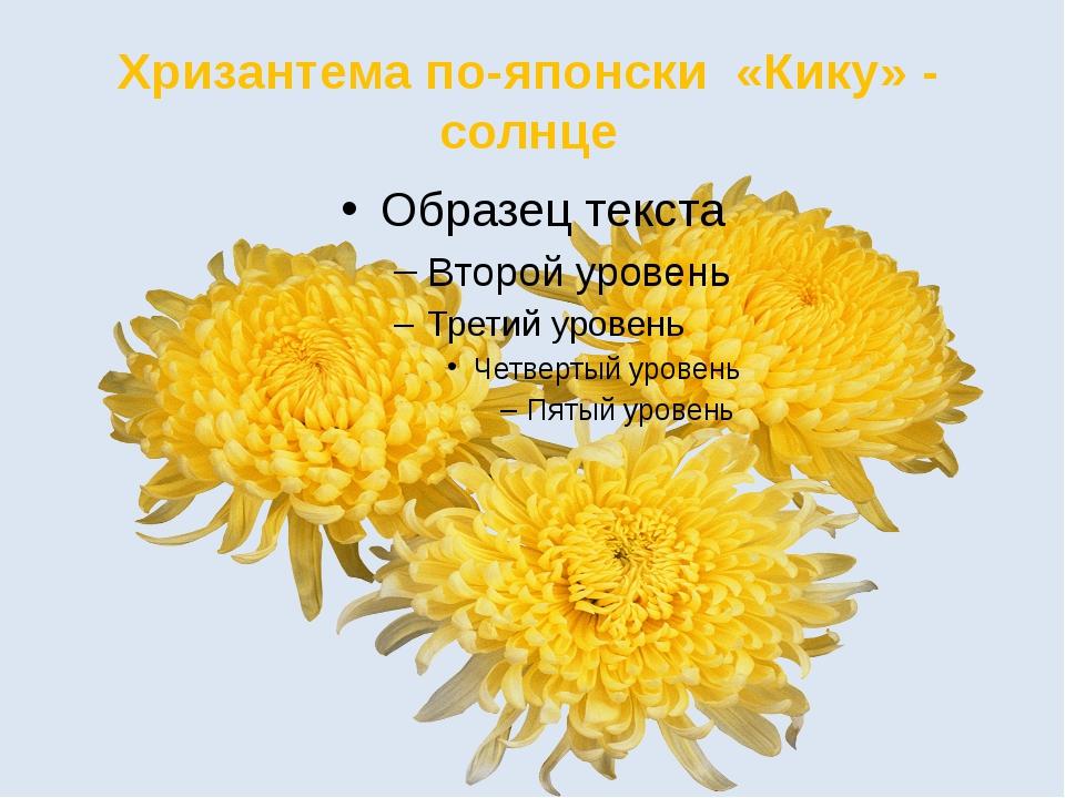 Хризантема по-японски «Кику» - солнце