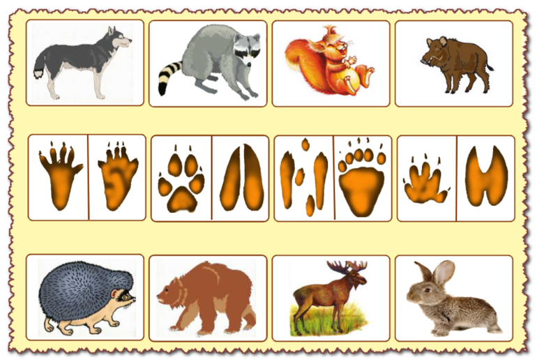 C:\Users\User\Desktop\Дикие животные\79c285520c5caa1cd1f4639a0bd7ba25.png