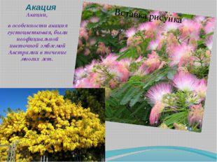 Акация Акации, в особенности акация густоцветковая, были неофициальной цветоч