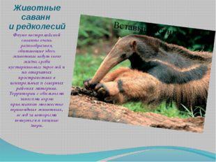 Животные саванн и редколесий Фауна австралийской саванны очень разнообразная,