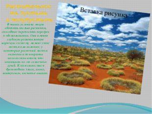 Растительность пустынь и полупустынь В таких условиях могут обитать только ра