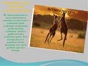 Животный мир пустынь и полупустынь Из млекопитающих к таким типичным животным