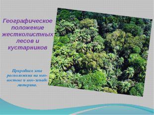 Географическое положение жестколистных лесов и кустарников Природная зона рас