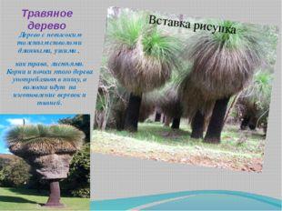 Травяное дерево Дерево с невысоким толстым стволом и длинными, узкими , как т