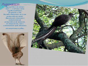 Лирохвост Лирохвосты, илиптицы-лиры— семейство птиц отряда воробьиных. Вклю