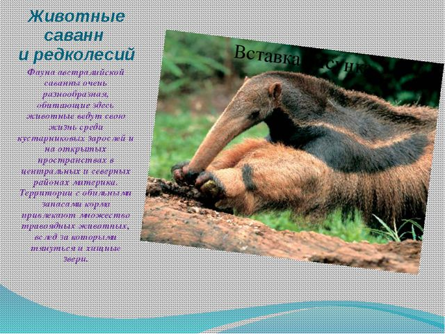Животные саванн и редколесий Фауна австралийской саванны очень разнообразная,...