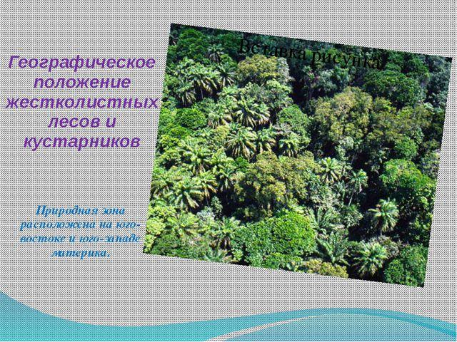 Географическое положение жестколистных лесов и кустарников Природная зона рас...