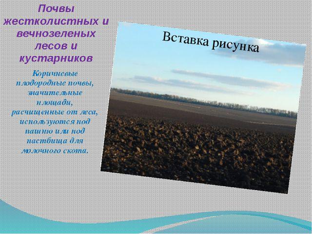 Почвы жестколистных и вечнозеленых лесов и кустарников Коричневые плодородные...