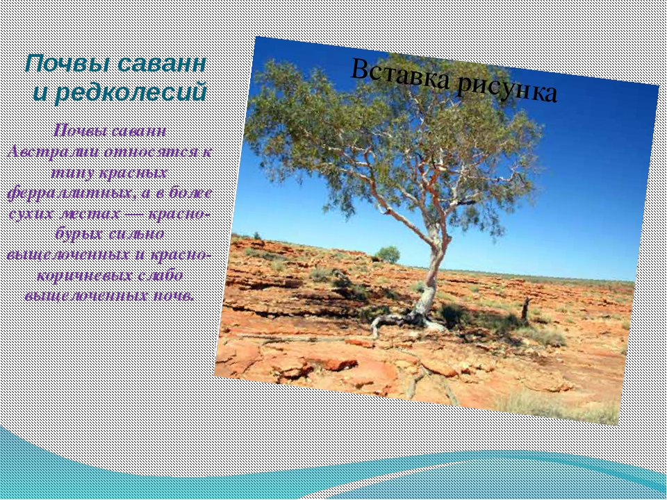 Почвы саванн и редколесий Почвы саванн Австралии относятся к типу красных фер...