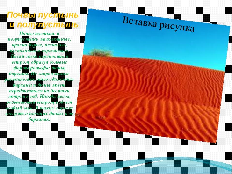 Почвы пустынь и полупустынь Почвы пустынь и полупустынь маломощные, красно-бу...