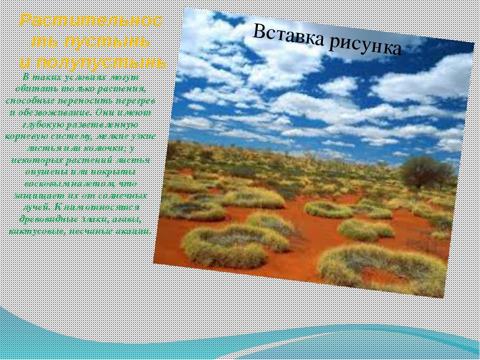 Растительность пустынь и полупустынь В таких условиях могут обитать только ра...