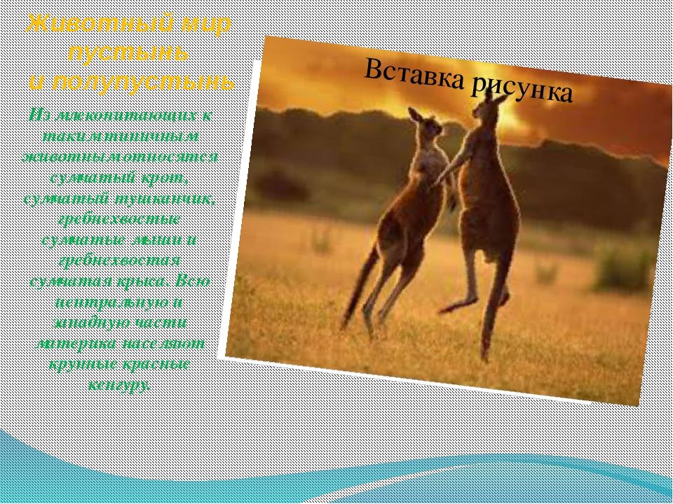 Животный мир пустынь и полупустынь Из млекопитающих к таким типичным животным...