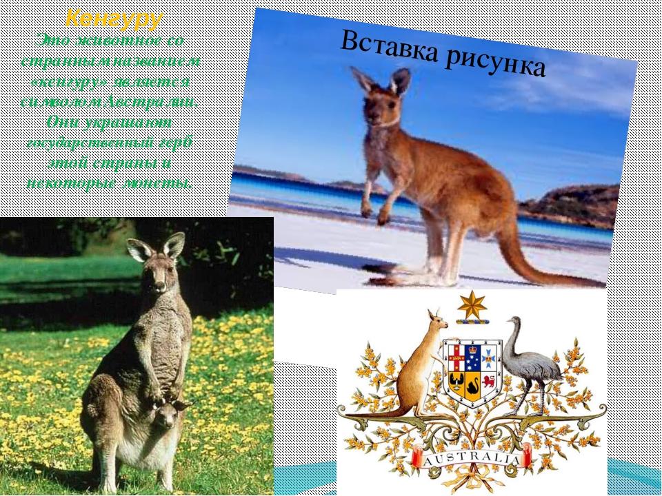 Кенгуру Это животное со странным названием «кенгуру» является символом Австра...