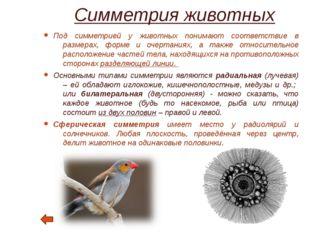 Симметрия в архитектуре Симметрия сооружения связывается с организацией его ф