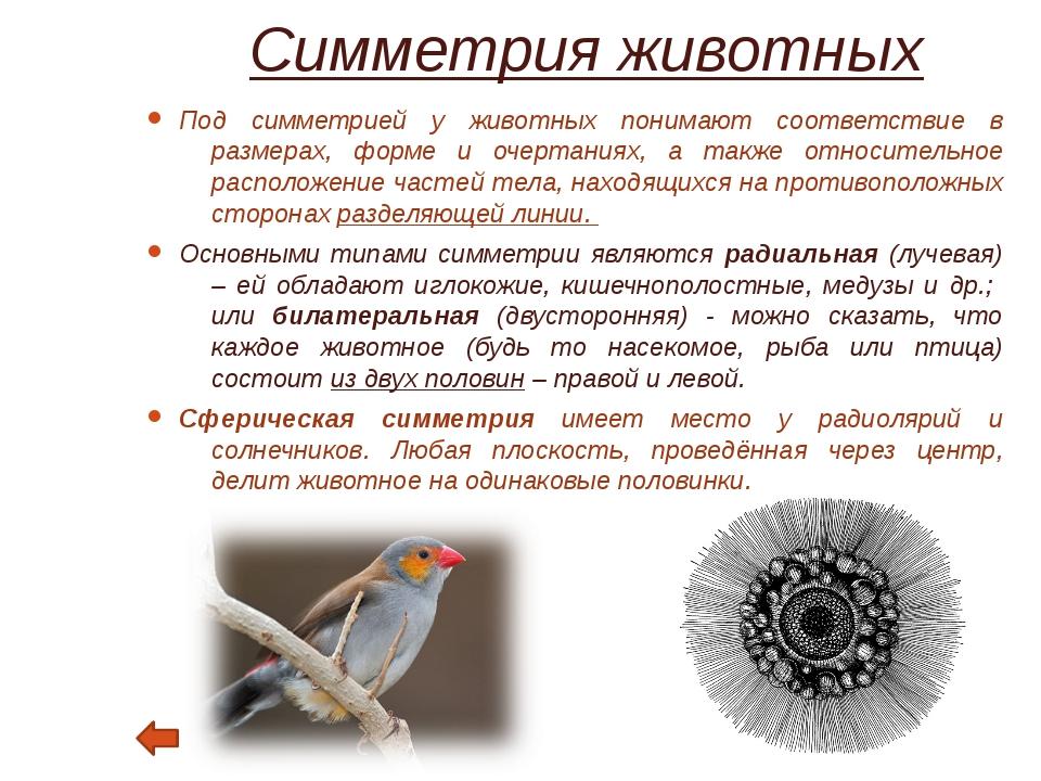 Симметрия в архитектуре Симметрия сооружения связывается с организацией его ф...