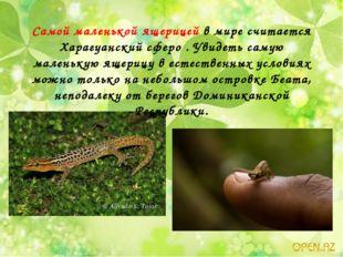 Самой маленькой ящерицей в мире считается Харагуанский сферо . Увидеть самую