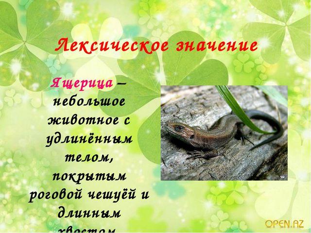 Лексическое значение Ящерица – небольшое животное с удлинённым телом, покрыты...
