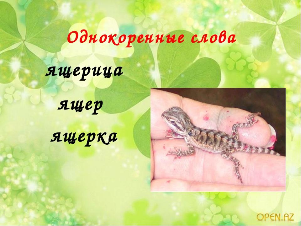 Однокоренные слова ящерица ящер ящерка