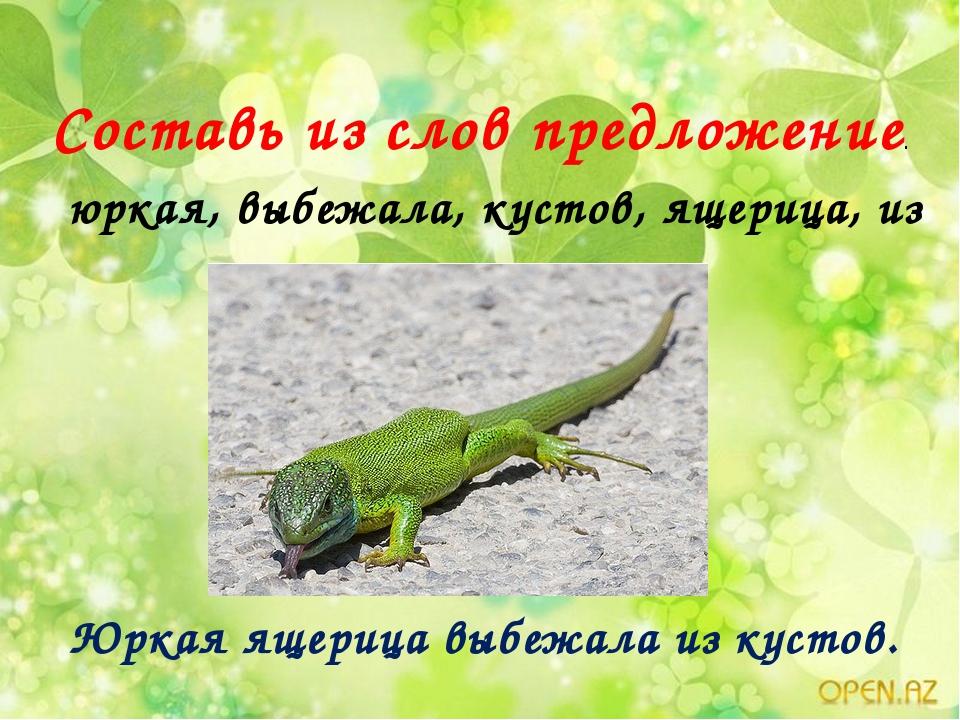 Составь из слов предложение. юркая, выбежала, кустов, ящерица, из Юркая ящери...