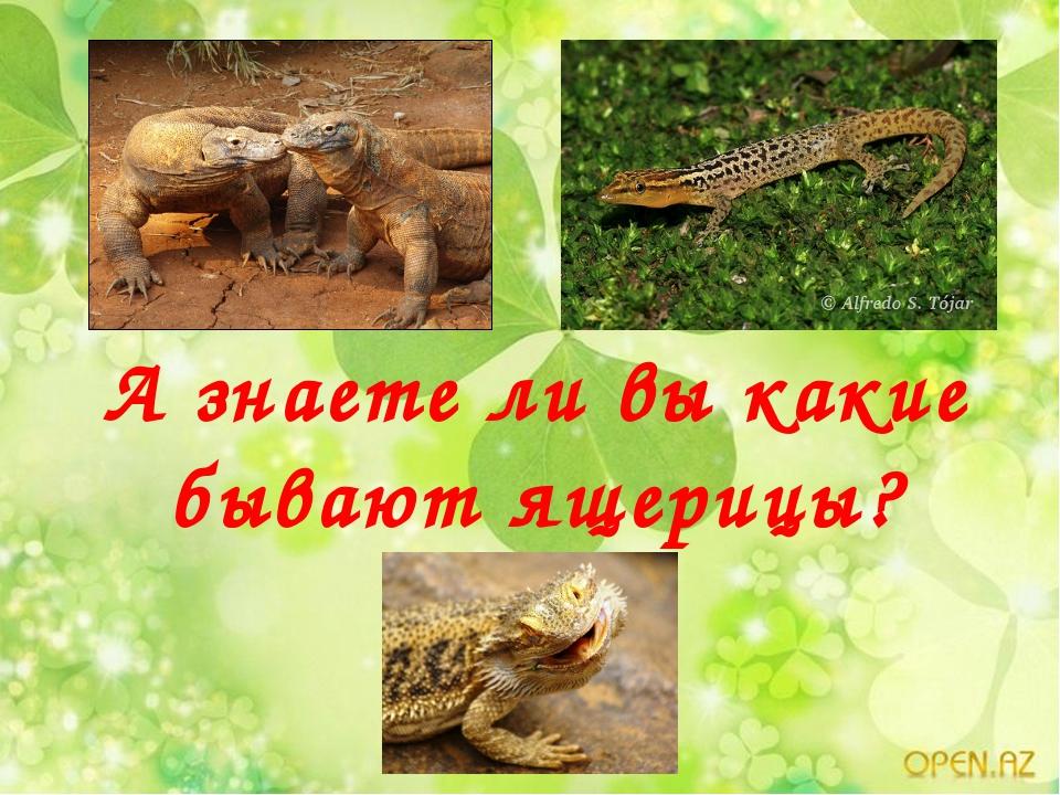 А знаете ли вы какие бывают ящерицы?