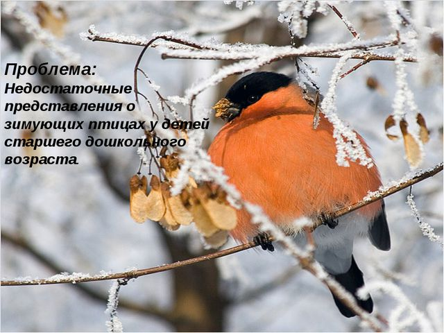 Проблема: Недостаточные представления о зимующих птицах у детей старшего дошк...
