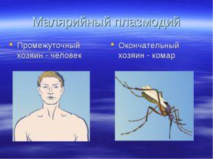 Малярийный плазмодий Промежуточный хозяин - человек Окончательный хозяин - ко