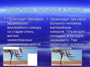 Заражение человека и комара Происходит при укусе заражённого малярийного кома