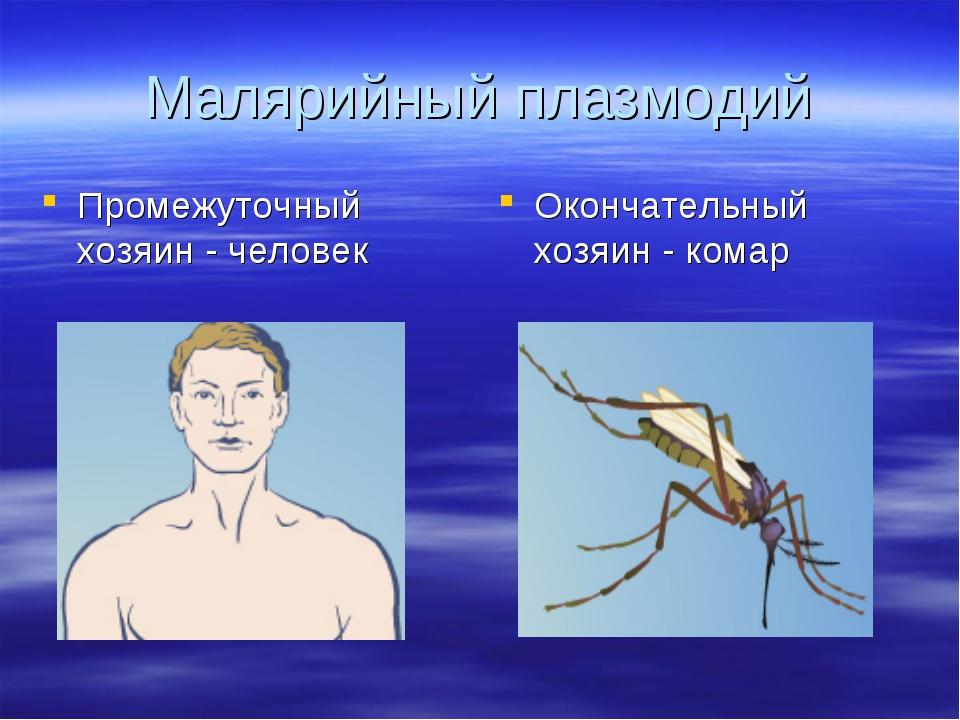Малярийный плазмодий Промежуточный хозяин - человек Окончательный хозяин - ко...