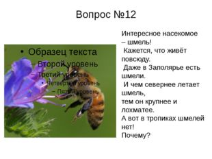 Вопрос №12 Интересное насекомое – шмель! Кажется, что живёт повсюду. Даже в З