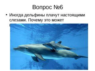 Вопрос №6 Иногда дельфины плачут настоящими слезами. Почему это может происхо