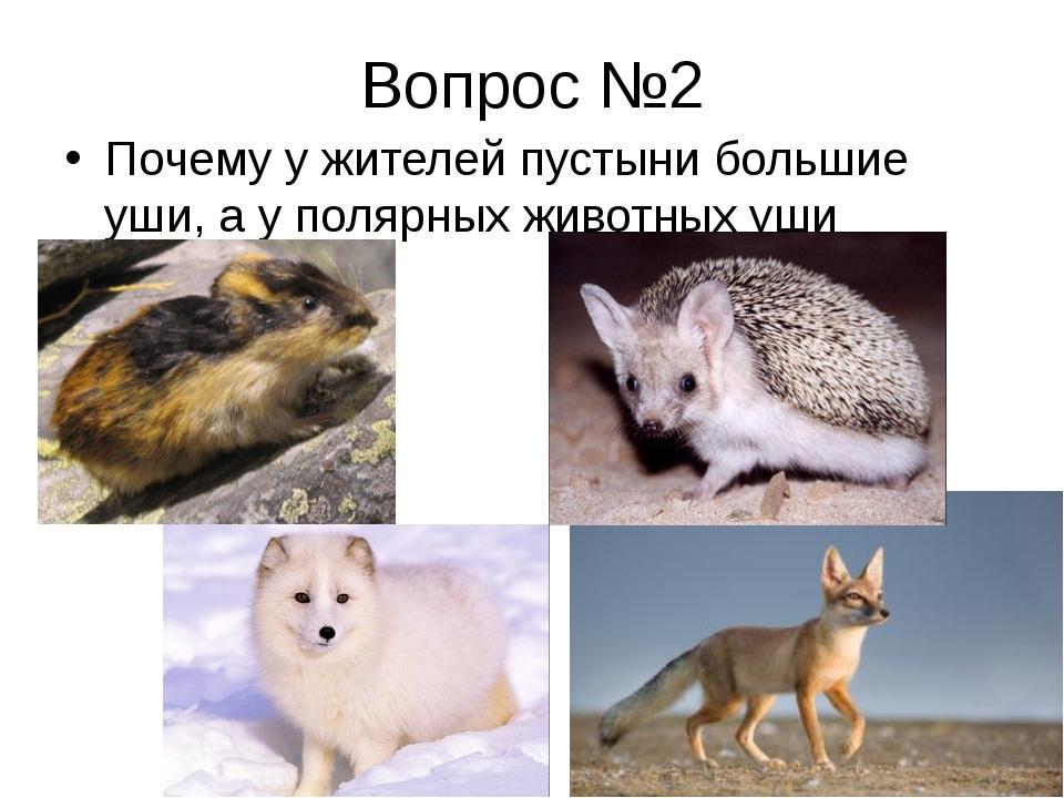Вопрос №2 Почему у жителей пустыни большие уши, а у полярных животных уши мал...