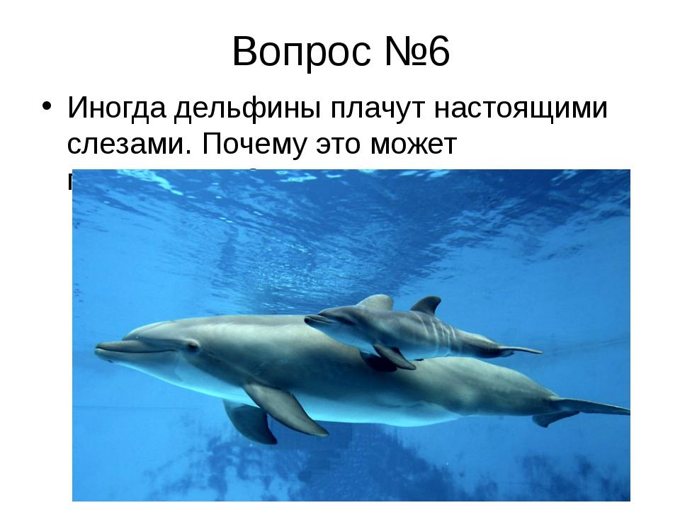 Вопрос №6 Иногда дельфины плачут настоящими слезами. Почему это может происхо...