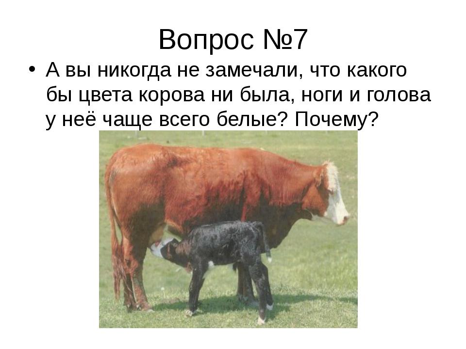 Вопрос №7 А вы никогда не замечали, что какого бы цвета корова ни была, ноги...