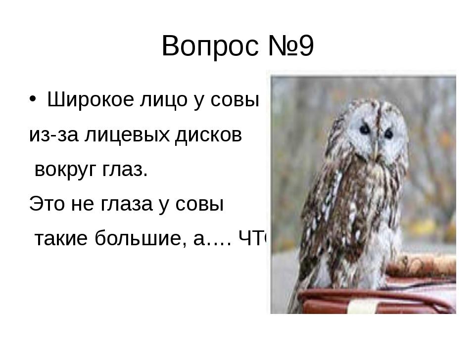 Вопрос №9 Широкое лицо у совы из-за лицевых дисков вокруг глаз. Это не глаза...