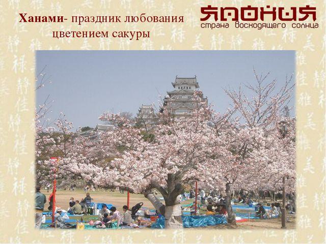 Ханами- праздник любования цветением сакуры