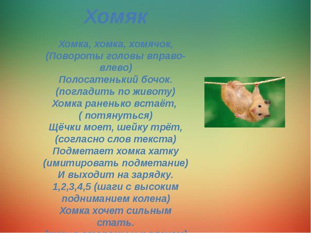 Хомяк Хомка, хомка, хомячок, (Повороты головы вправо-влево) Полосатенький боч...