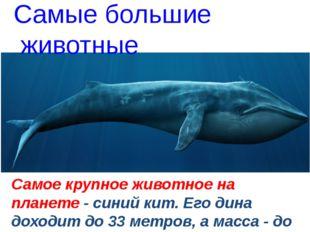 Самое крупное животное на планете - синий кит. Его дина доходит до 33 метров
