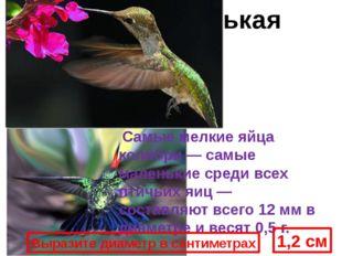 Кроме того, колибри могут летать задом наперед, единственные из всех птиц. Са