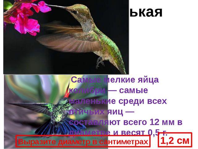 Кроме того, колибри могут летать задом наперед, единственные из всех птиц. Са...