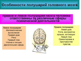 Особенности полушарий головного мозга правое и левое полушария мозга человека